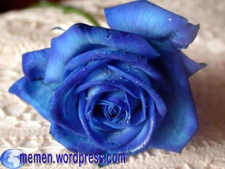 blue-roses-copy